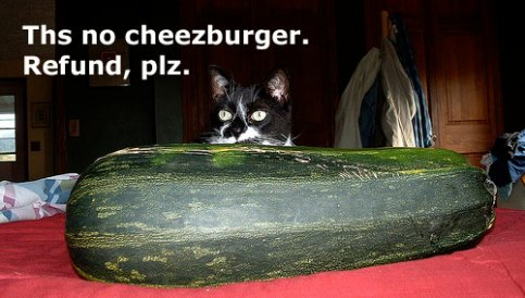 this no cheezburger