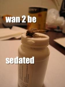 sedated
