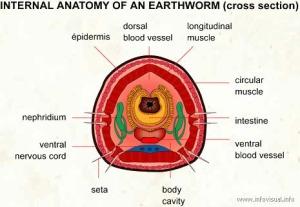 earthwormxs