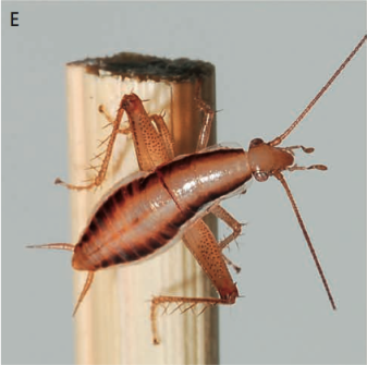 Image Result For Canroaches Bite