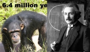 Einstein and a chimp