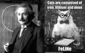 Einstein and a cat