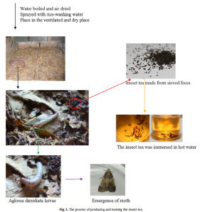 diagram of how to make insect tea