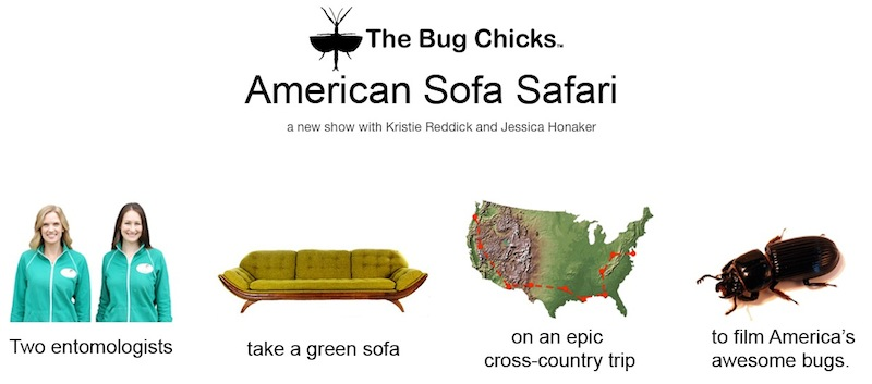 Sofa Safari